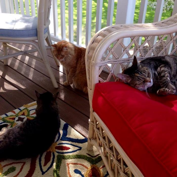 Cats Love A Screened Porch