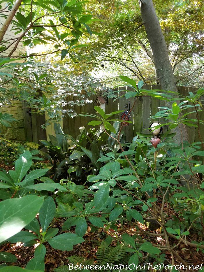 Shade Garden, Secret Garden