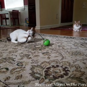 Great Cat Toys