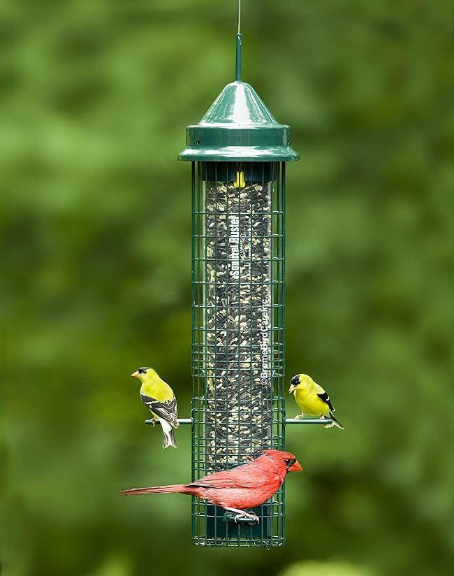 Favorite Bird Feeder, Best