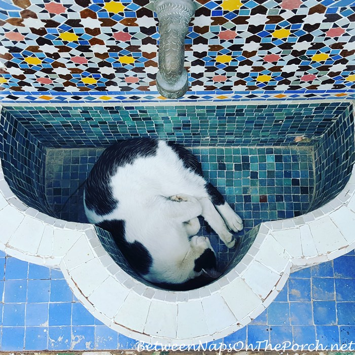 Sleeping Kitty in Fountain, Fes