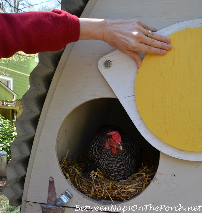 Chicken Coop with Remote Controlled Door