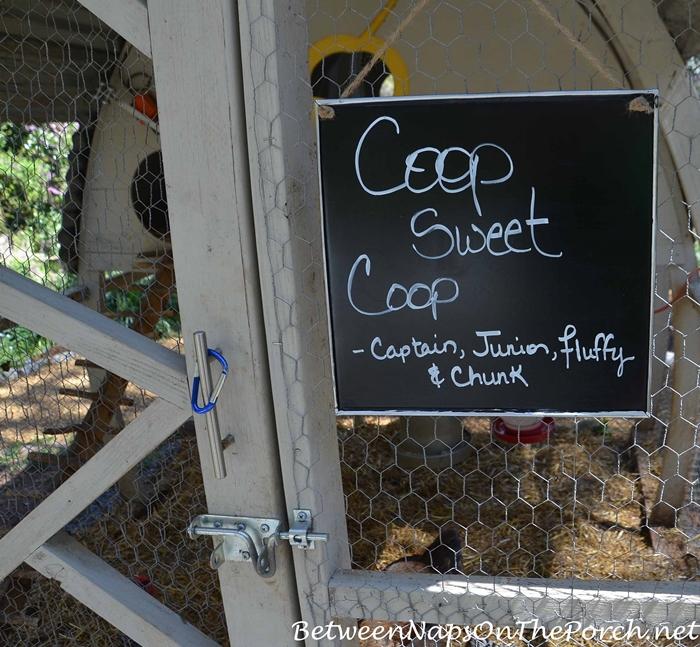 Coop Sweet Coop