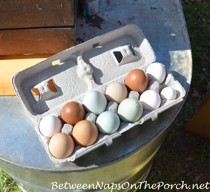 Eggs, Urban Coop Tour