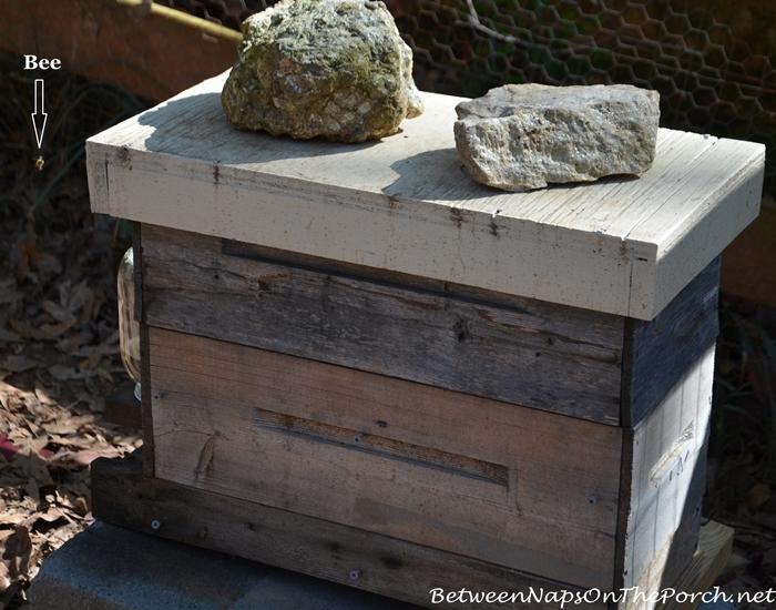 Hone Bee Hive or Box