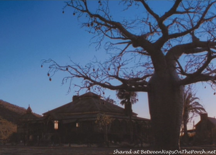 Baob Tree in Australia Movie