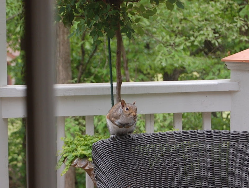 Nosy Squirrel