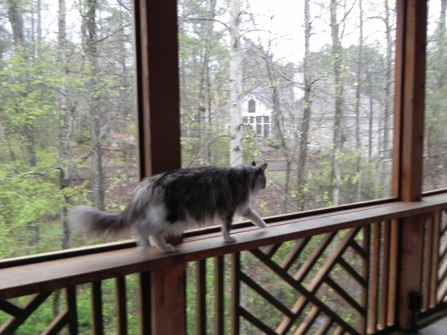 A Kitty Cat Rail For The Porch