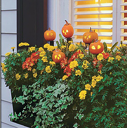 Halloween Decorating Party Ideas Between Naps On The Porch Fascinating Decorating Window Boxes For Fall