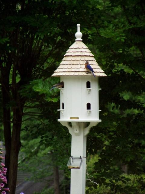 Dovecote In The Garden Landscape