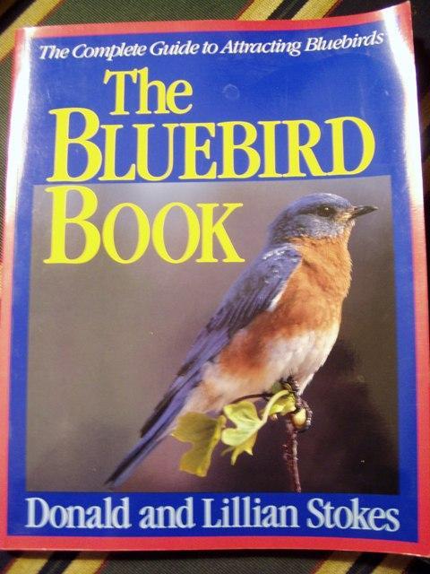 Bluebird Nesting In A Dovecote